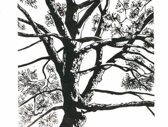 L'arbre au fil du sensible INGE