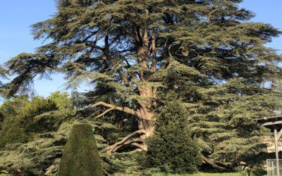 «Comme un arbre dans la ville»