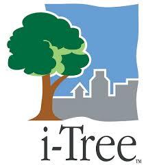 Promenade: «i-Tree»
