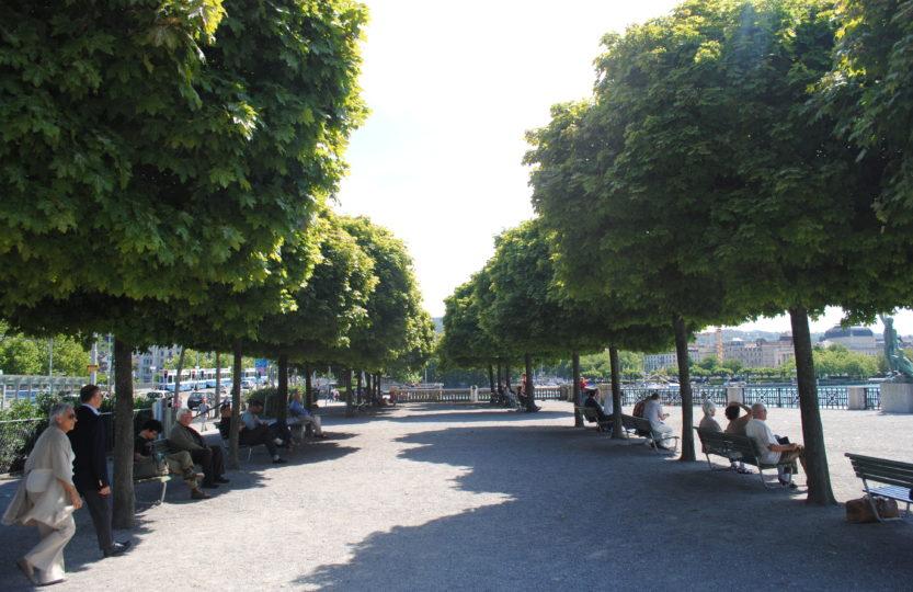Dites-moi où sont les arbres… Stratégies d'avenir en matière d'espaces non construits et d'espaces verts