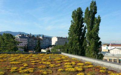 Rapport final du projet «Toitures végétalisées» (TVEG)