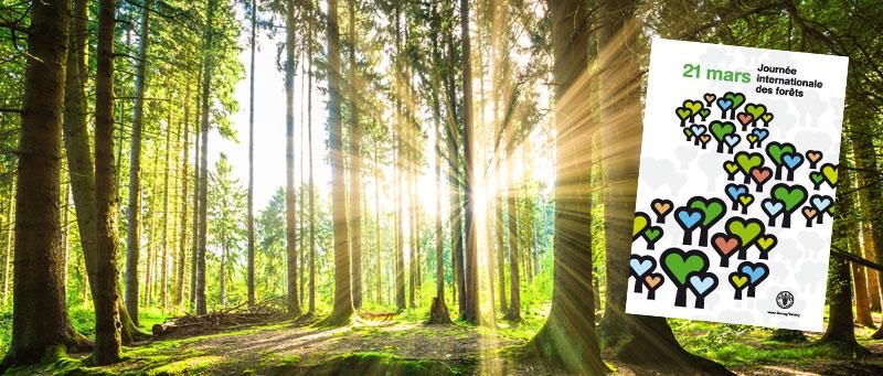 Journée internationale de la forêt sur le thème « Forêt et villes durables »