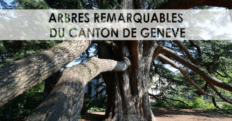 Arbre remarquables du canton de Genève INGE